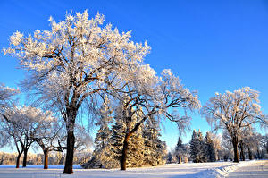Обои Зима Парки Снег Деревья Природа