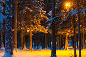 Картинки Времена года Зима Парки Дерева Ствол дерева Снег Природа