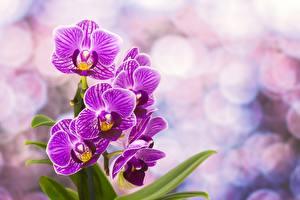 Фотография Орхидея Фиолетовые цветок