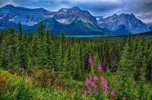 Фотография Канада Горы Леса Парки Пейзаж Джаспер парк Hector Lake Waputik Range Alberta
