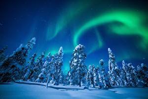Фотографии Зимние Финляндия Лапландия область Полярное сияние Снег Ночные Деревья Природа