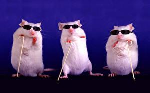 Картинки Грызуны Мыши Трое 3 Очки Белый