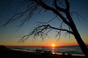 Фото Рассветы и закаты Море Деревья Ветки Солнце Силуэт Природа