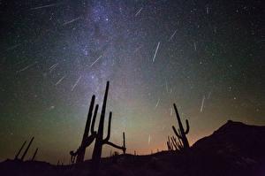 Картинки Кактусы Звезды Небо Силуэта Ночь Космос