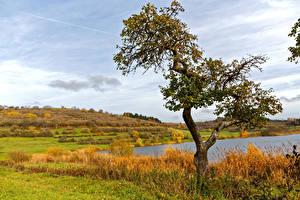 Картинка Германия Пейзаж Осенние Озеро Поля Деревья Schalkenmehren Природа
