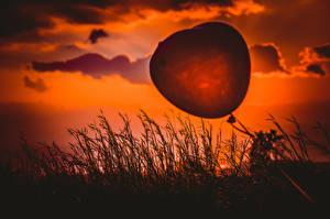 Обои Рассвет и закат Воздушный шарик Сердечко Силуэты Траве Heart balloon Природа