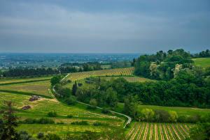 Картинка Италия Поля Дороги Brisighella Природа