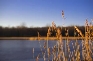 Обои Озеро Осень Трава Природа фото