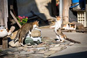 Картинка Кошки Улица Вдвоем животное