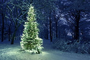 Картинки Зимние Парки Праздники Новый год Снег Дерева Елка Гирлянда Природа