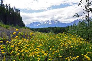 Фотография Канада Пейзаж Горы Лес Лютик Луга Облака Northern British Columbia Природа