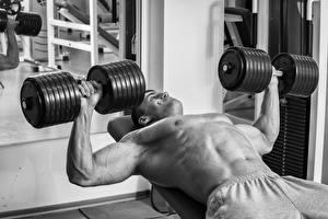 Картинки Бодибилдинг Мужчины Гантель Тренировка спортивная