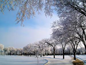 Фотография Парки Зимние Небо Дерево Снег Природа