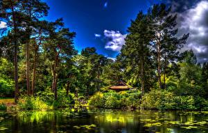 Обои Англия Парки Лето Пруд Деревья Кусты HDRI Tatton Hall Park Природа