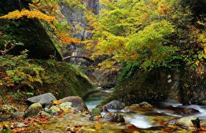 Картинки Леса Парки Камни Мосты Речка Осень Скала Мох Природа