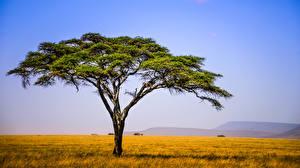 Обои Поля Небо Луга Африка Дерева Tanzania East Africa