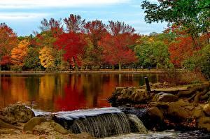 Фотографии США Озеро Осень Парки Нью-Йорк Belmont Lake State Park Babylon Природа