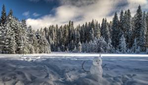 Обои Штаты Парк Зима Леса Йосемити Снеговики Калифорния Снег Природа