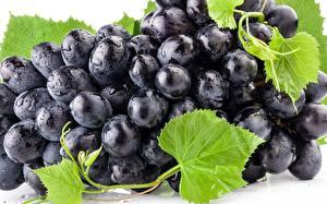 Картинки Виноград Крупным планом Продукты питания