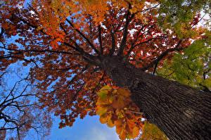 Обои Осень Деревья Ствол дерева Вид снизу Природа фото