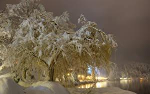 Картинки Словения Времена года Зимние Снег Деревья Ночные Bled Природа