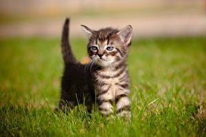 Фотография Кошки Котята Трава Животные
