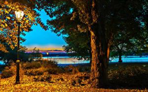 Фотография Берлин Германия Парки Ствол дерева Ночью Уличные фонари Природа