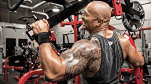 Обои Dwayne Johnson Мужчины Татуировки Спина Майка machine the rock gym workout Спорт Знаменитости фото