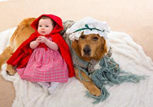 Фотографии Собаки Золотистый ретривер Ретривер Униформе Младенец Девочка Платья Очки ребёнок Животные