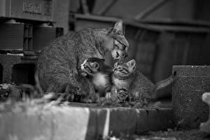 Фото Коты Котят Трое 3 Животные