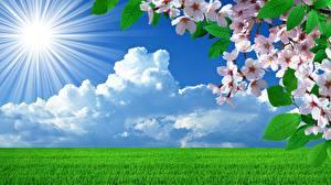 Обои для рабочего стола Весна Цветущие деревья Облако Газон Лучи света Природа