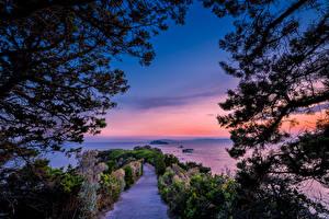 Картинки Италия Побережье Рассветы и закаты Кусты Ветки Toscana Природа