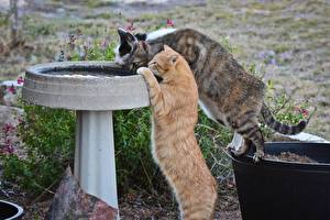Картинка Кошки Втроем Животные