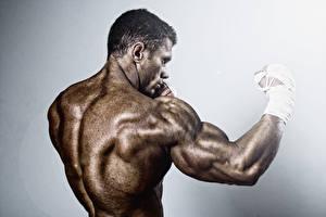 Фотографии Бокс Мужчина Спины training back muscles Спорт