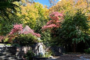 Фотография Штаты Парки Осенние Лестница Дерева Скамья Winterthur Delaware Природа