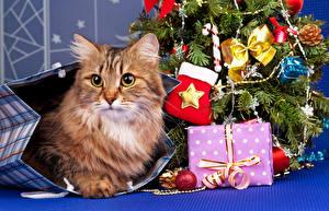 Картинка Праздники Новый год Кошки Подарки Елка Животные