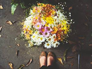 Картинки Букет Ног Листья Цветы