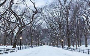 Картинки Парк Зимние Америка Нью-Йорк Аллеи Деревья manhattan central park Города