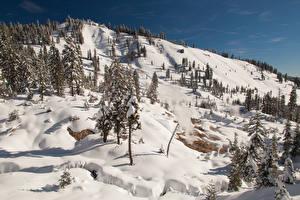 Картинка Штаты Парки Горы Зимние Снеге Ель Природа