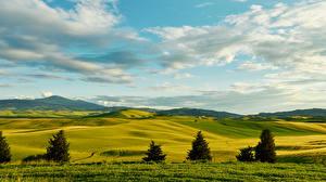 Фотографии Италия Пейзаж Поля Луга Небо Тоскана Ель Холмы Природа