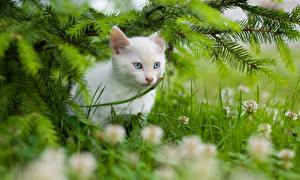 Картинка Кошки Белый Котят Ветвь Животные