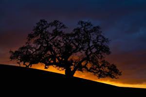Фотография Рассветы и закаты Силуэт Деревья Ветвь Природа