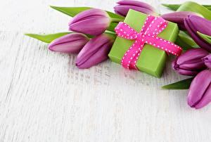 Фотография Тюльпаны Подарки Фиолетовый Цветы