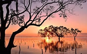 Картинка Филиппины Рассвет и закат Деревьев Силуэта Ветвь Mindanao Природа