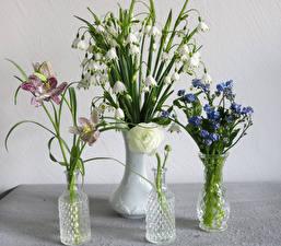 Фотографии Ландыши Орхидея Лютик Вазе Цветок Цветы