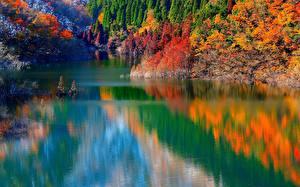 Картинка Озеро Осень Леса Природа