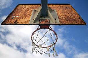 Фотография Баскетбол Сетка Спорт