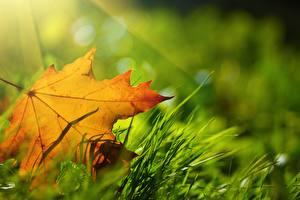 Обои Осень Крупным планом Листья Трава Природа фото