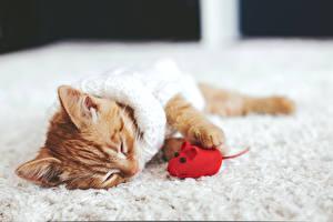 Картинка Коты Мыши Котята Сон