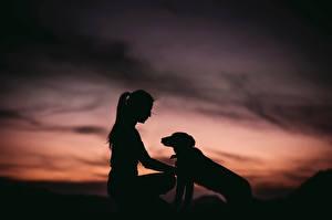 Фотографии Собаки Силуэт Девушки Животные